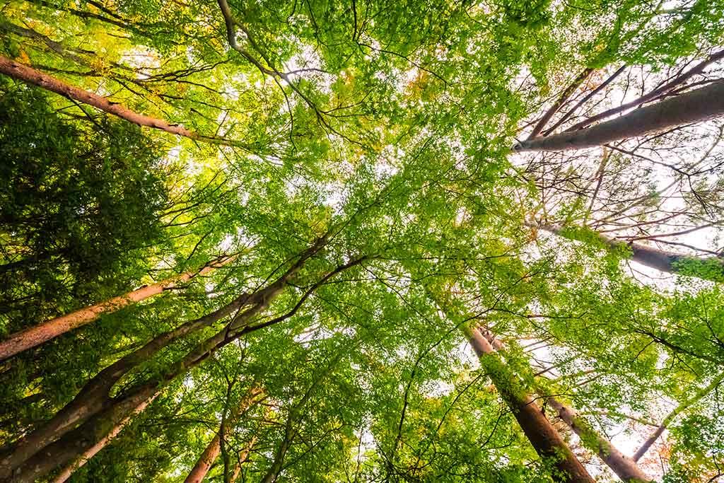 Bäume und Sonnne für den Rohstoff Holz